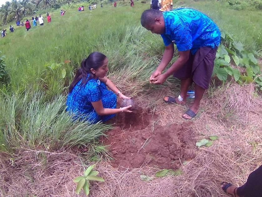 cop 23 coconut planting